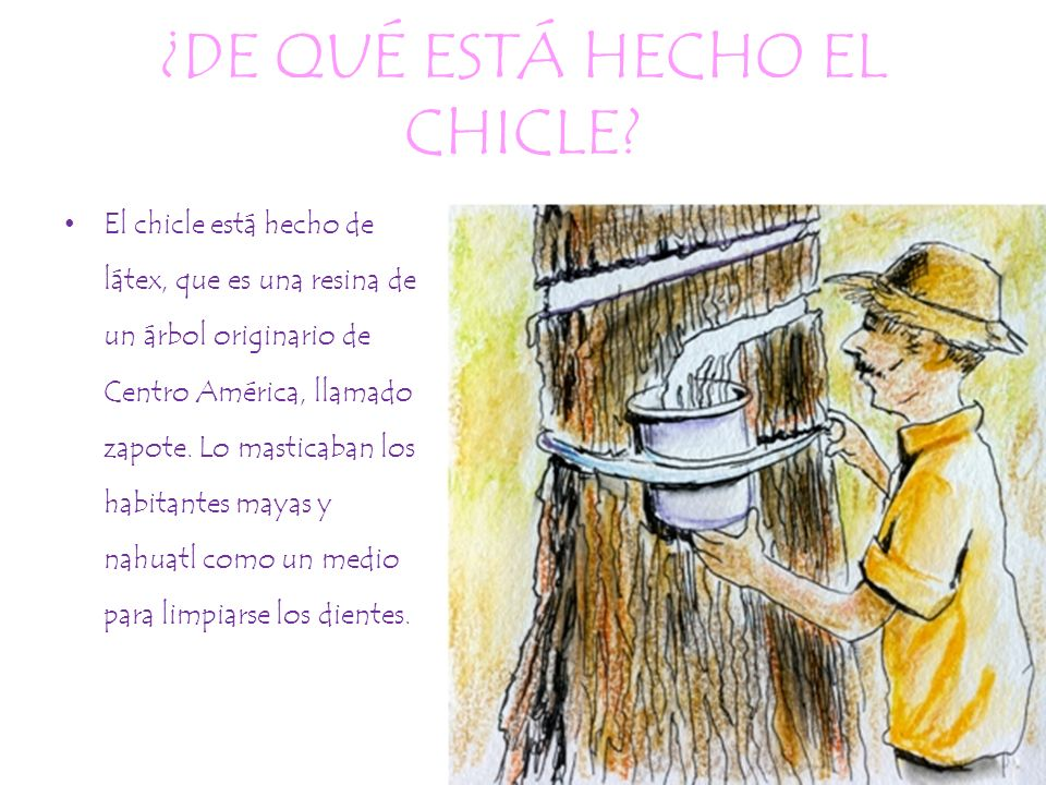 ¿DE QUÉ ESTÁ HECHO EL CHICLE? El chicle está hecho de látex, que es una resina de un árbol originario de Centro América, llamado zapote. Lo masticaban