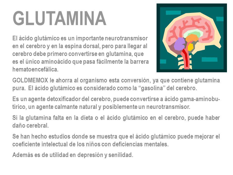 GLUTAMINA El ácido glutámico es un importante neurotransmisor en el cerebro y en la espina dorsal, pero para llegar al cerebro debe primero convertirs