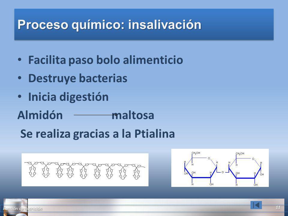 Proceso químico: insalivación Facilita paso bolo alimenticio Destruye bacterias Inicia digestión Almidón maltosa Se realiza gracias a la Ptialina Func