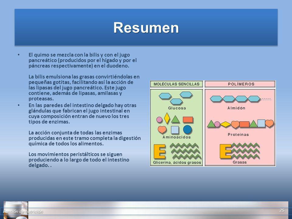 ResumenResumen El quimo se mezcla con la bilis y con el jugo pancreático (producidos por el hígado y por el páncreas respectivamente) en el duodeno. L