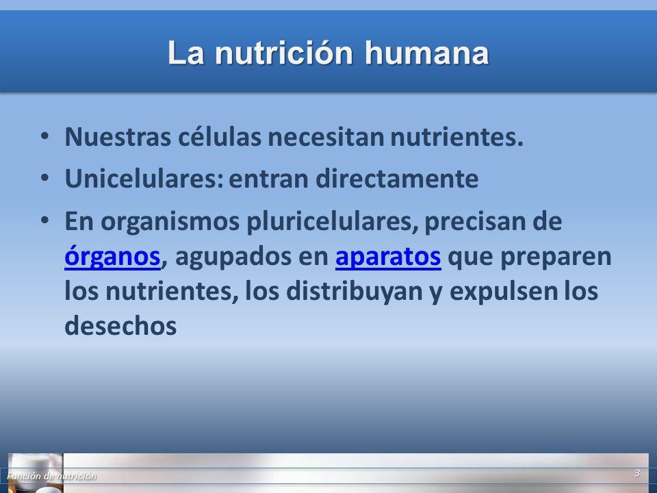 La nutrición humana Nuestras células necesitan nutrientes. Unicelulares: entran directamente En organismos pluricelulares, precisan de órganos, agupad