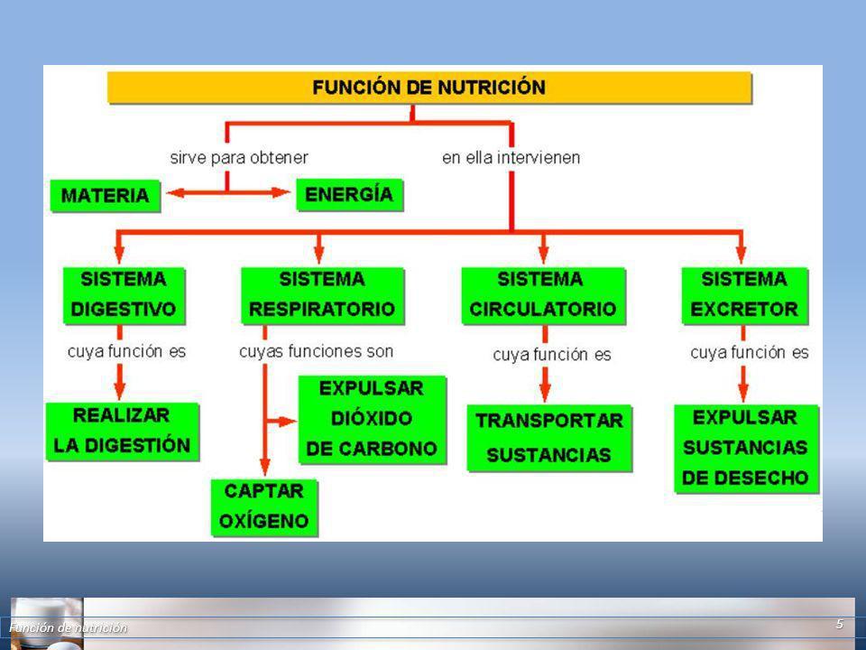 Función de nutrición 5