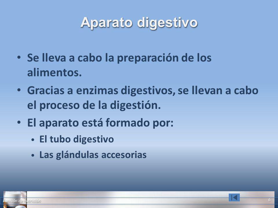 Aparato digestivo Se lleva a cabo la preparación de los alimentos. Gracias a enzimas digestivos, se llevan a cabo el proceso de la digestión. El apara