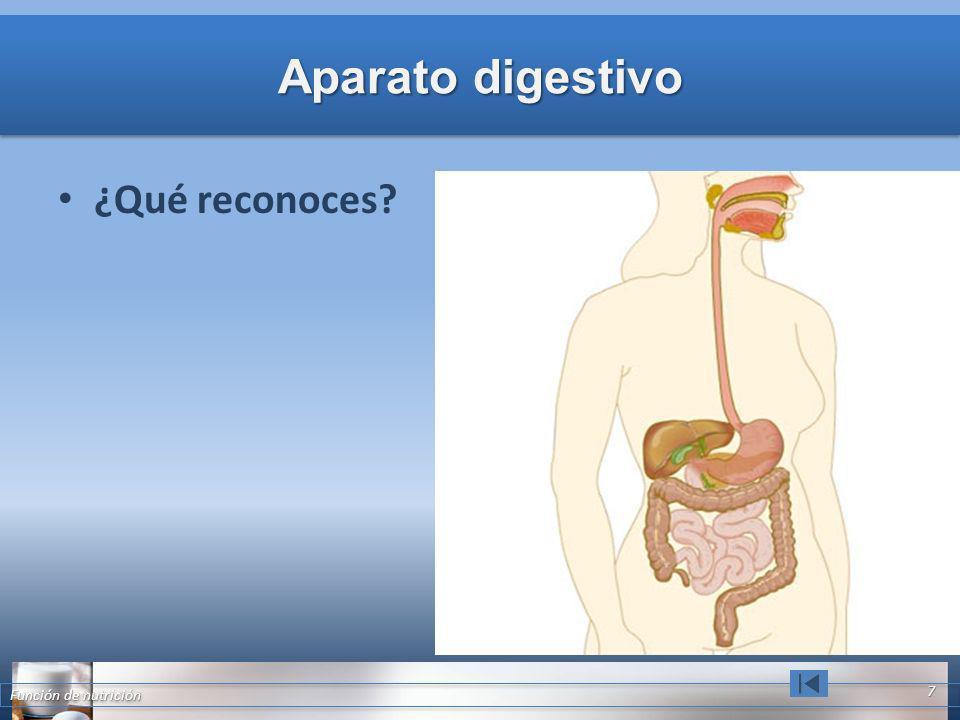 Aparato digestivo ¿Qué reconoces? Función de nutrición 7