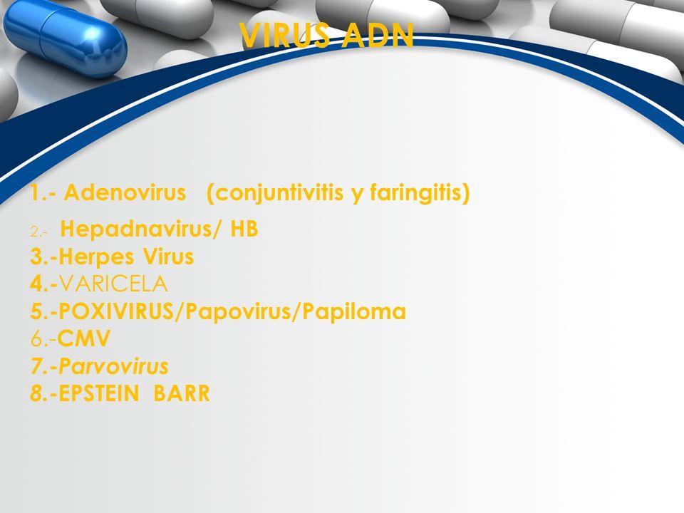 VIRUS ADN 1.- Adenovirus (conjuntivitis y faringitis) 2.- Hepadnavirus/ HB 3.-Herpes Virus 4.- VARICELA 5.-POXIVIRUS/Papovirus/Papiloma 6.- CMV 7.-Par