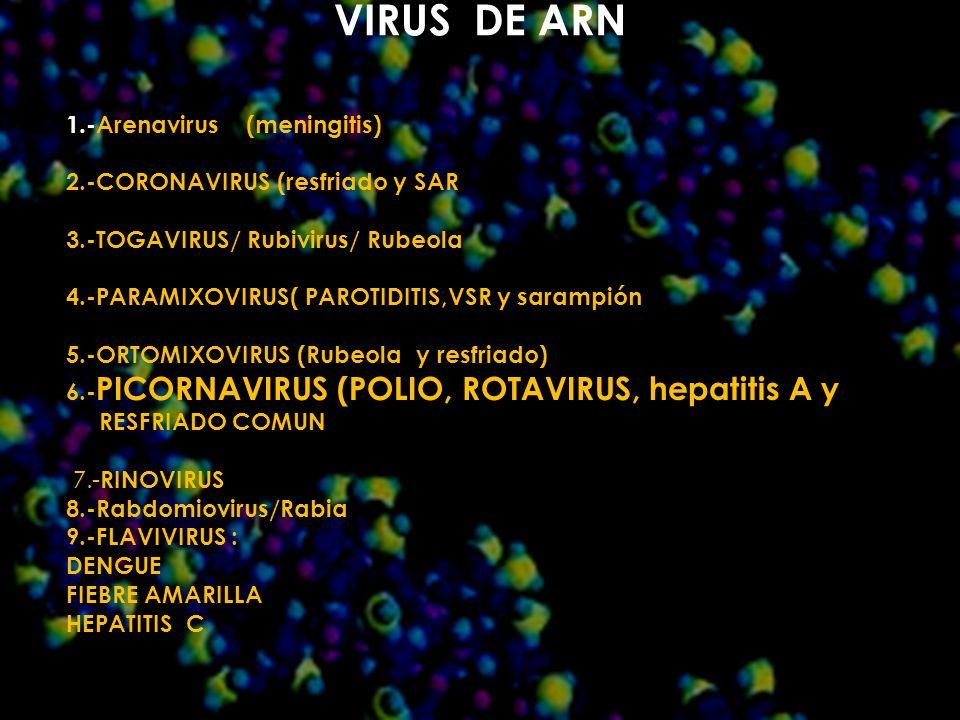 VIRUS DE ARN 1.-Arenavirus (meningitis) 2.-CORONAVIRUS (resfriado y SAR 3.-TOGAVIRUS/ Rubivirus/ Rubeola 4.-PARAMIXOVIRUS( PAROTIDITIS,VSR y sarampión