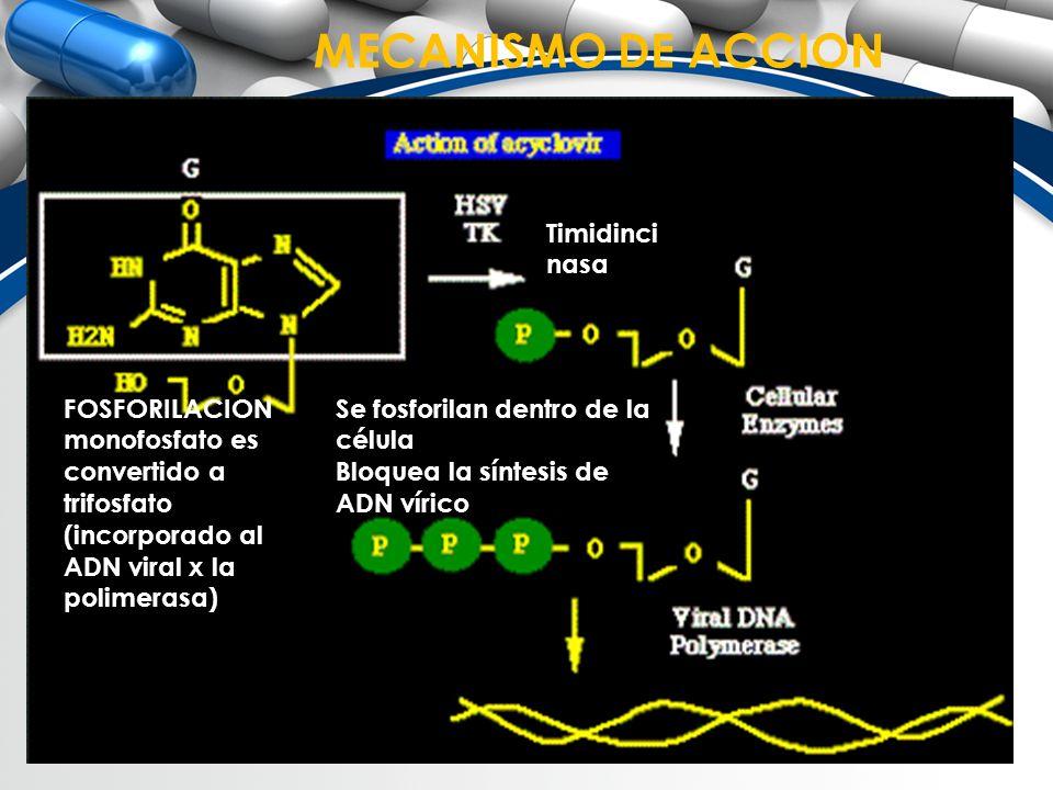 MECANISMO DE ACCION Se fosforilan dentro de la célula Bloquea la síntesis de ADN vírico Timidinci nasa FOSFORILACION monofosfato es convertido a trifo