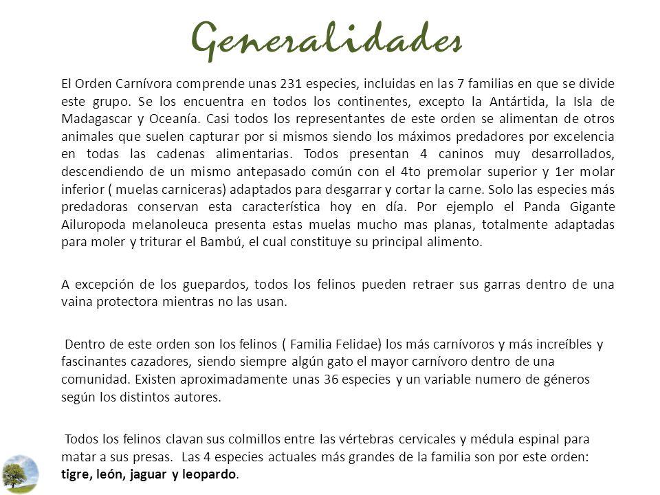 Generalidades El Orden Carnívora comprende unas 231 especies, incluidas en las 7 familias en que se divide este grupo. Se los encuentra en todos los c