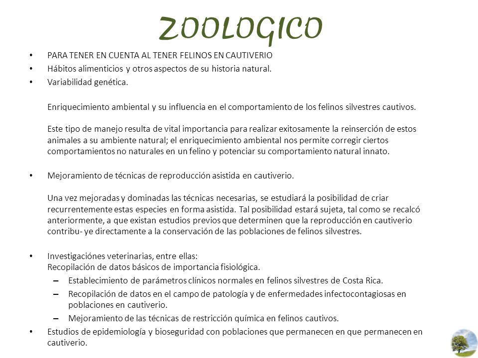 ZOOLOGICO PARA TENER EN CUENTA AL TENER FELINOS EN CAUTIVERIO Hábitos alimenticios y otros aspectos de su historia natural. Variabilidad genética. Enr