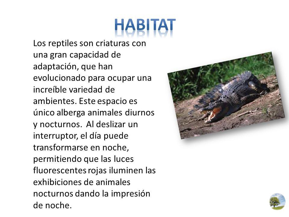 Los reptiles son criaturas con una gran capacidad de adaptación, que han evolucionado para ocupar una increíble variedad de ambientes. Este espacio es