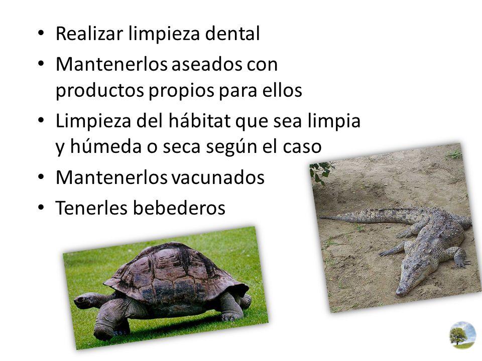 Realizar limpieza dental Mantenerlos aseados con productos propios para ellos Limpieza del hábitat que sea limpia y húmeda o seca según el caso Manten