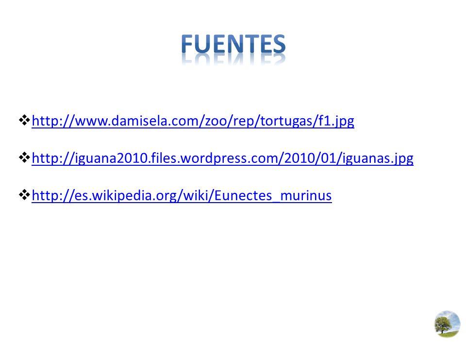 http://www.damisela.com/zoo/rep/tortugas/f1.jpg http://iguana2010.files.wordpress.com/2010/01/iguanas.jpg http://es.wikipedia.org/wiki/Eunectes_murinu