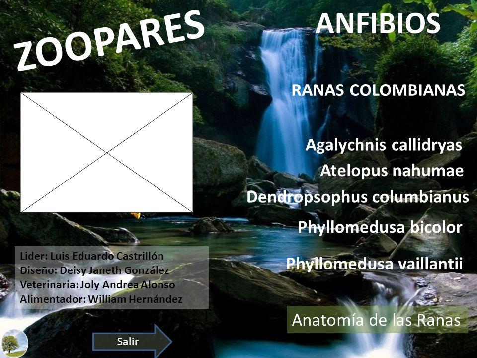 ZOOPARES ANFIBIOS Atelopus nahumae Dendropsophus columbianus Phyllomedusa bicolor Agalychnis callidryas Phyllomedusa vaillantii RANAS COLOMBIANAS Lide