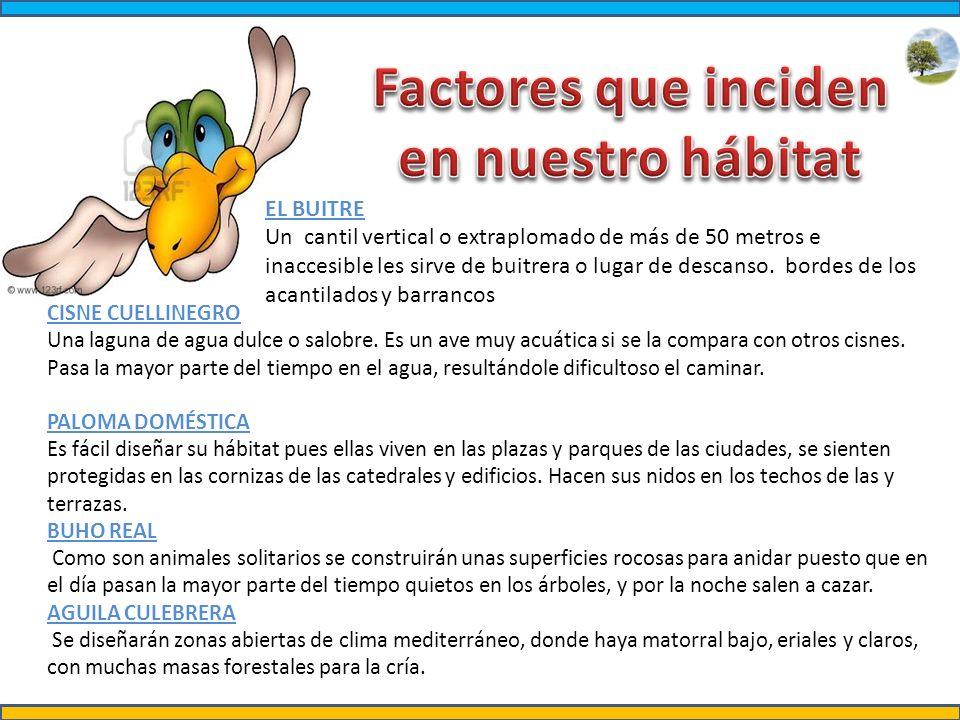 http://www.damisela.com/zoo/rep/tortugas/f1.jpg http://iguana2010.files.wordpress.com/2010/01/iguanas.jpg http://es.wikipedia.org/wiki/Eunectes_murinus