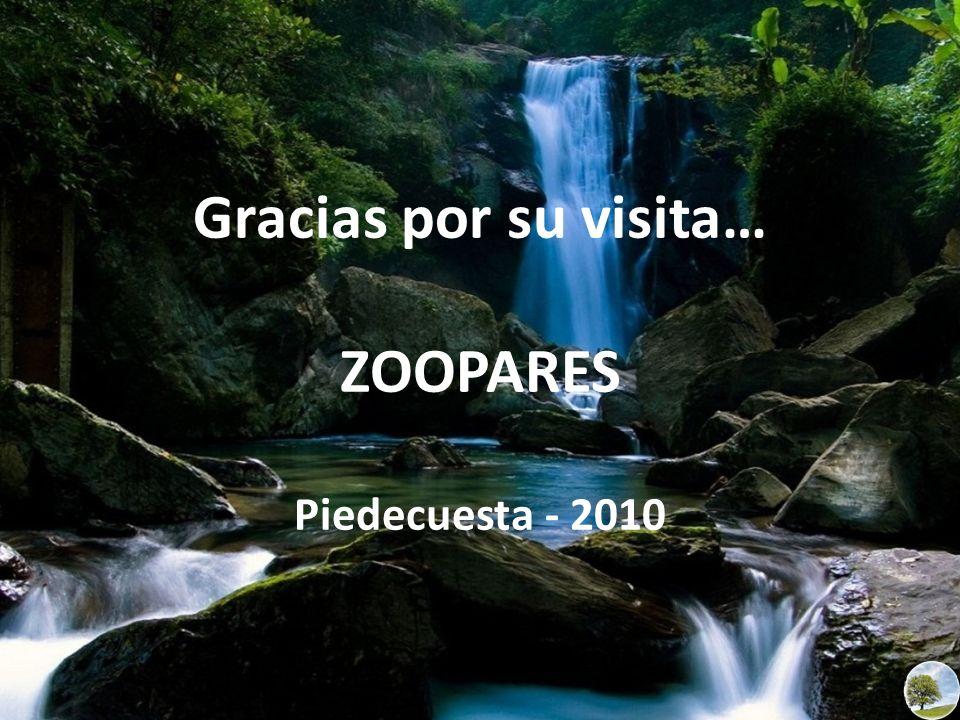 Gracias por su visita… ZOOPARES Piedecuesta - 2010
