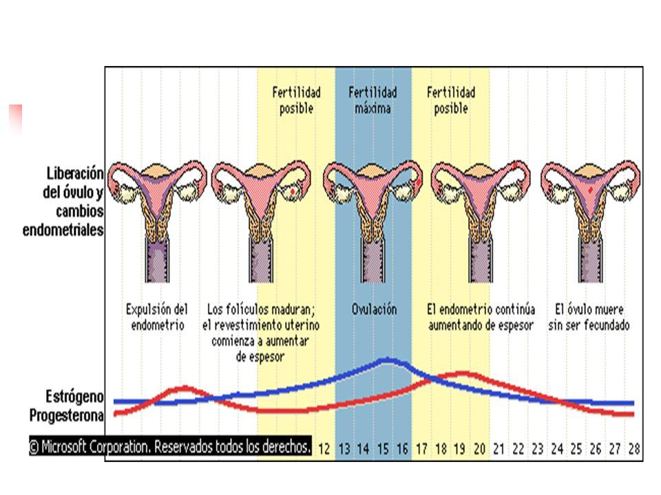 MÉTODOS NATURALES Método de Billings.Método del ritmo ( Calendario).