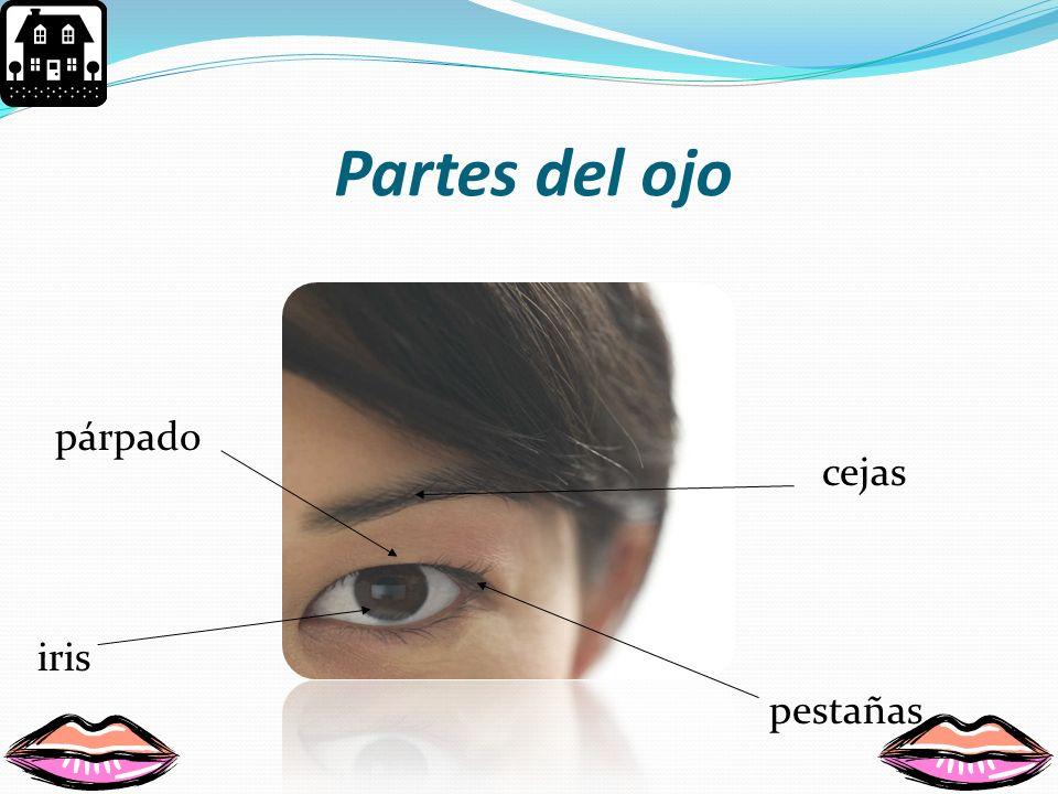 Los Ojos En los ojos esta el sentido de la vista. Estos están en la cabeza y pueden ser de diferentes formas.