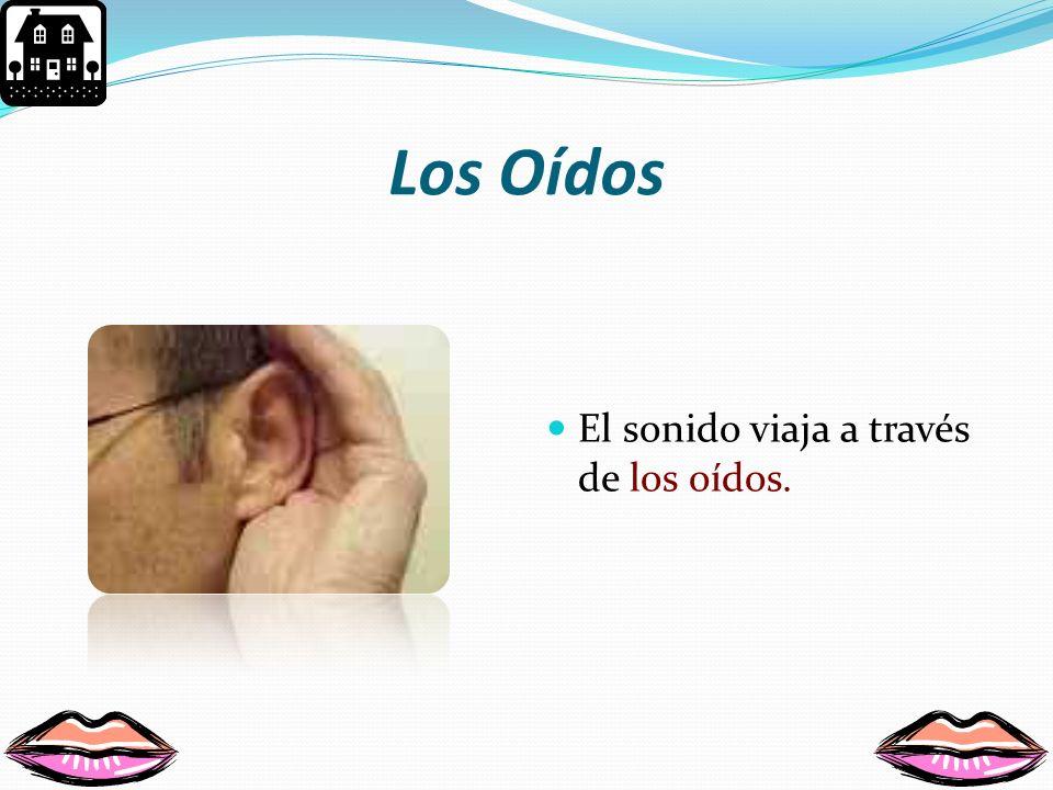 El sentido de la audición Nos permite escuchar los sonidos a nuestro alrededor.