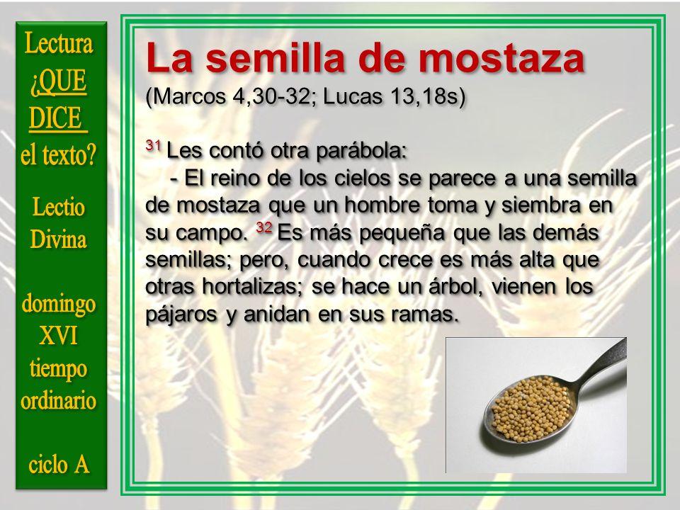 La semilla de mostaza (Marcos 4,30-32; Lucas 13,18s) 31 Les contó otra parábola: - El reino de los cielos se parece a una semilla de mostaza que un ho