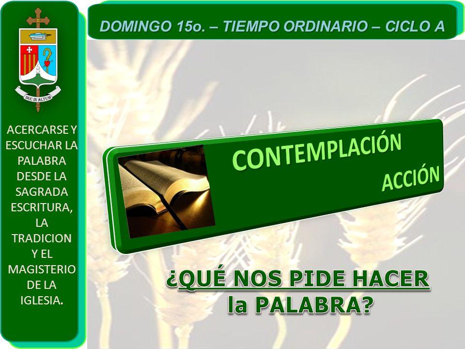 ACERCARSE Y ESCUCHAR LA PALABRA DESDE LA SAGRADA ESCRITURA, LA TRADICION. Y EL MAGISTERIO DE LA IGLESIA. DOMINGO 15o. – TIEMPO ORDINARIO – CICLO A
