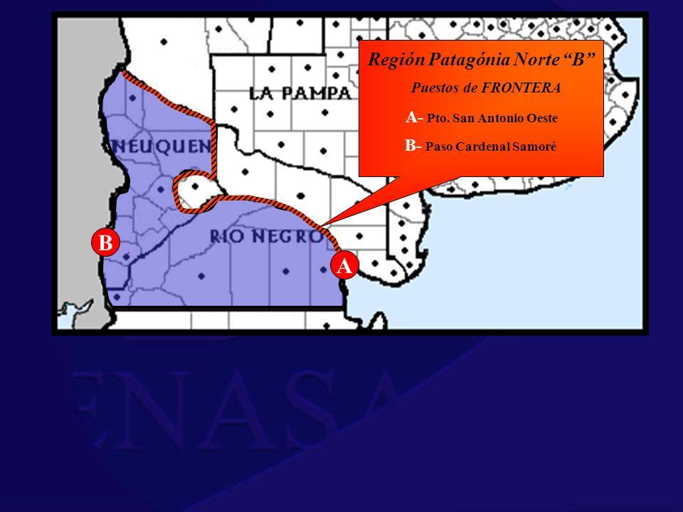 Región Patagónia Norte B A- Pto. San Antonio Oeste Puestos de FRONTERA A B B- Paso Cardenal Samoré