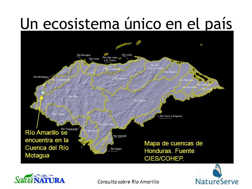 Consulta sobre Río Amarillo Un ecosistema único en el país Mapa de cuencas de Honduras.