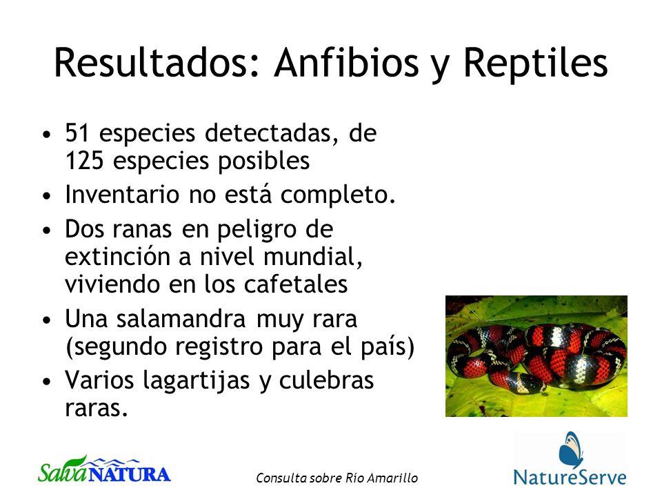 Consulta sobre Río Amarillo Resultados: Anfibios y Reptiles 51 especies detectadas, de 125 especies posibles Inventario no está completo.