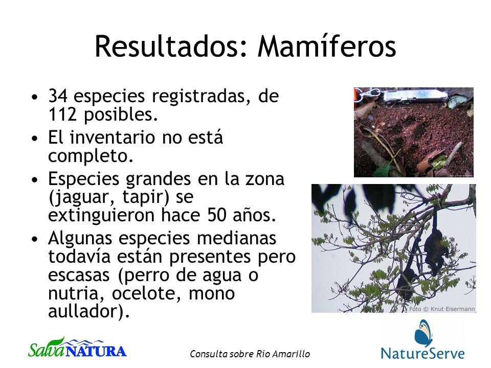 Consulta sobre Río Amarillo Resultados: Mamíferos 34 especies registradas, de 112 posibles.