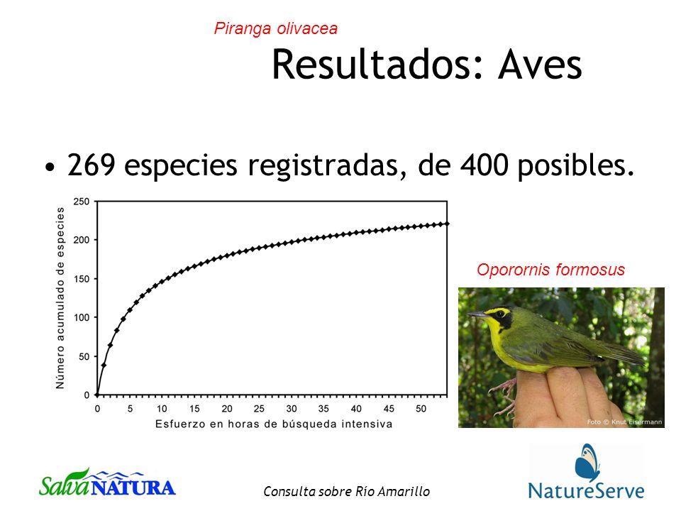 Consulta sobre Río Amarillo Resultados: Aves 269 especies registradas, de 400 posibles.