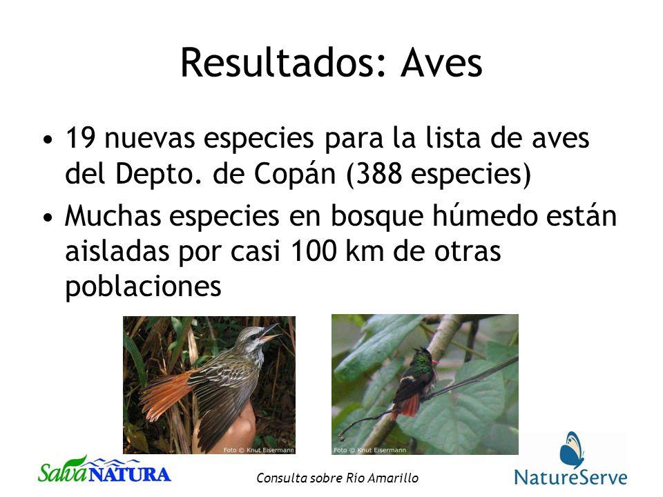Consulta sobre Río Amarillo Resultados: Aves 19 nuevas especies para la lista de aves del Depto.