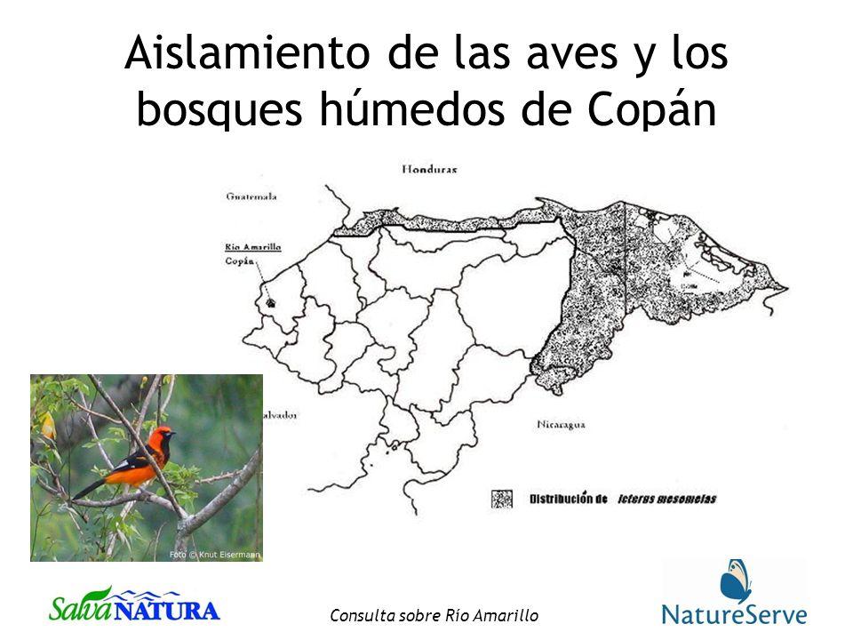 Consulta sobre Río Amarillo Aislamiento de las aves y los bosques húmedos de Copán
