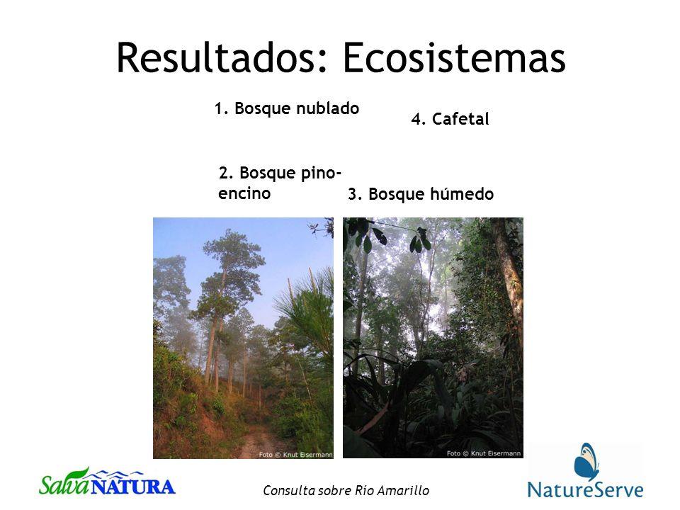 Consulta sobre Río Amarillo Resultados: Ecosistemas 1.