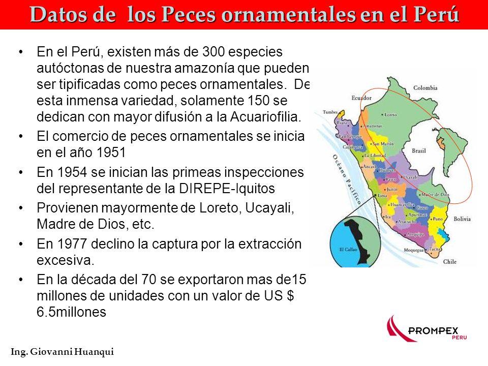 Precio promedio en la cadena de distribución de los Peces ornamentales Ing. Giovanni Huanqui