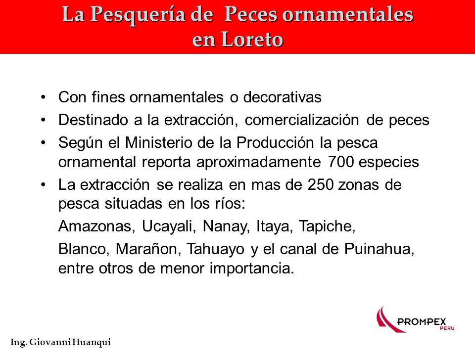 La Pesquería de Peces ornamentales en Loreto Ing.