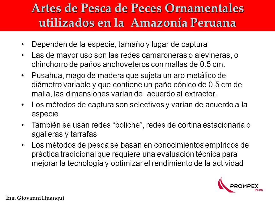Zonas de Pesca de Peces Ornamentales en Loreto Ing.