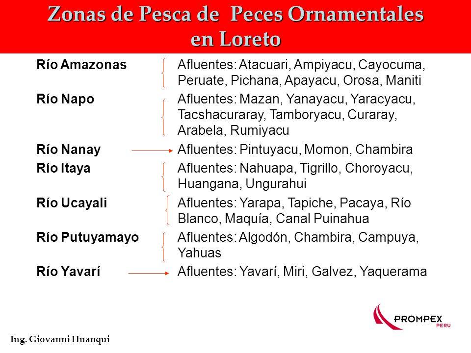 Movimiento de Peces ornamentales en Loreto Ing. Giovanni Huanqui