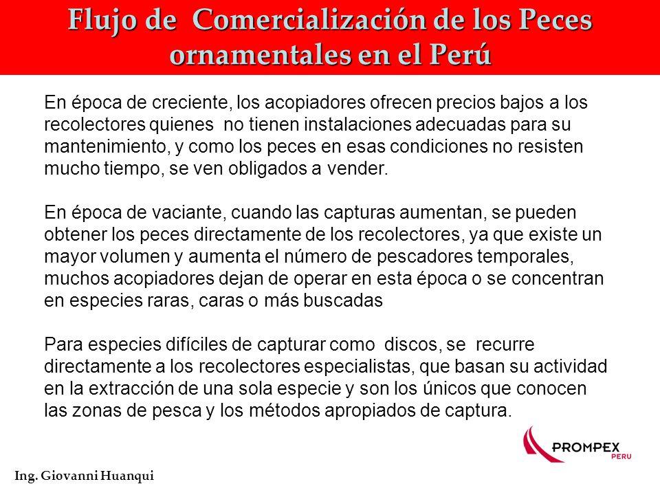 Flujo de Comercialización de los Peces ornamentales en el Perú Ing.