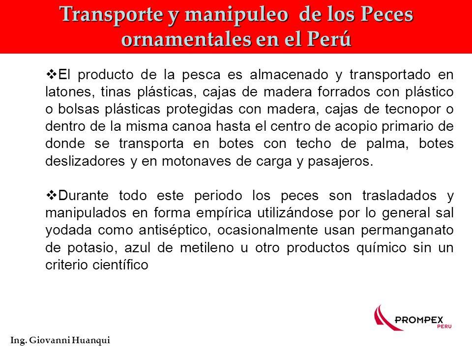 Transporte Interno de los Peces ornamentales en el Loreto Ing.