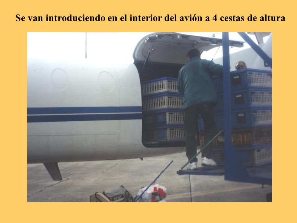 El camión con las cestas se traslada al Aeropuerto de Los Rodeos y las lleva hasta el avión.