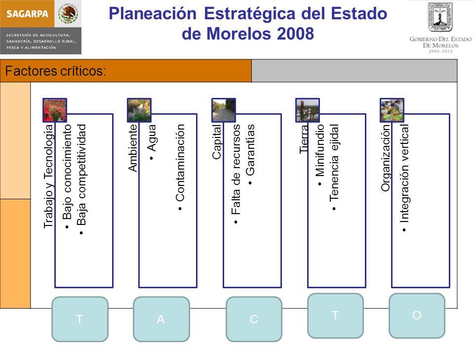 Planeación Estratégica del Estado de Morelos 2008 Factores críticos: Trabajo y Tecnología Bajo conocimiento Baja competitividad Ambiente Agua Contaminación Capital Falta de recursos Garantías Minifundio Tenencia ejidal Organización Integración vertical Tierra TAC TO