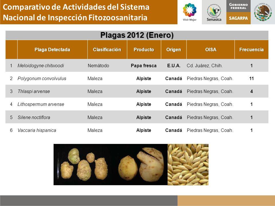 Plagas 2012 (Enero)Plagas 2012 (Enero) Plaga DetectadaPlaga DetectadaClasificaciónProductoOrigenOISAFrecuencia 1Meloidogyne chitwoodiNemátodoPapa fres