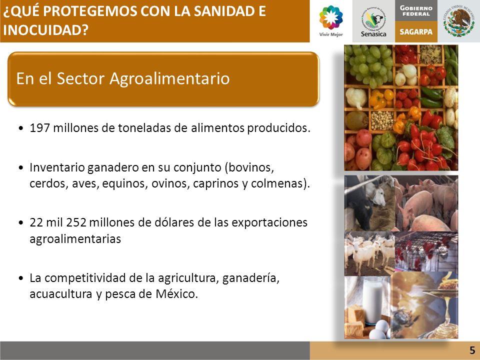 ¿QUÉ PROTEGEMOS CON LA SANIDAD E INOCUIDAD? 5 En el Sector Agroalimentario 197 millones de toneladas de alimentos producidos. Inventario ganadero en s
