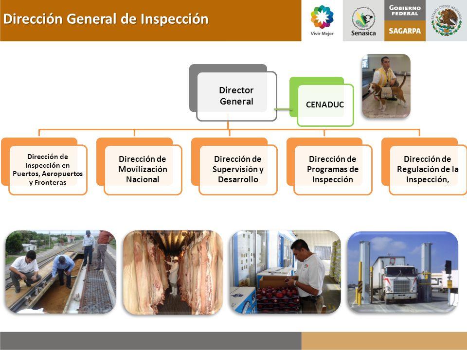 Dirección General de Inspección CENADUC Director General Dirección de Inspección en Puertos, Aeropuertos y Fronteras Dirección de Movilización Naciona