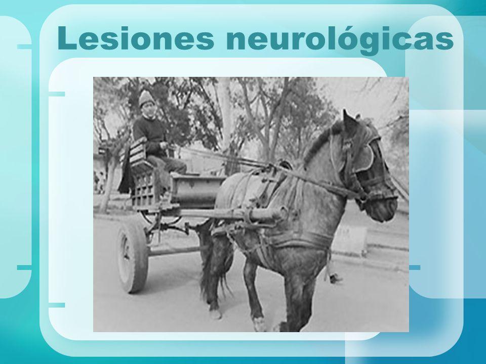 Lesiones neurológicas