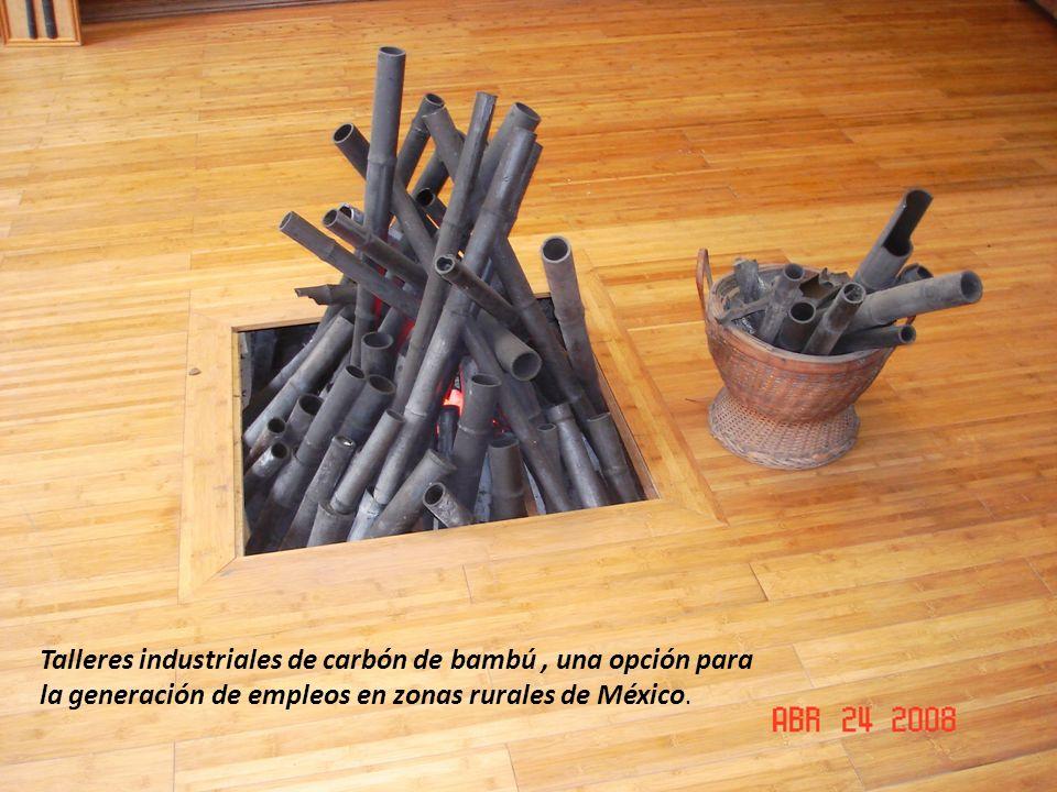 Talleres industriales de carbón de bambú, una opción para la generación de empleos en zonas rurales de México.