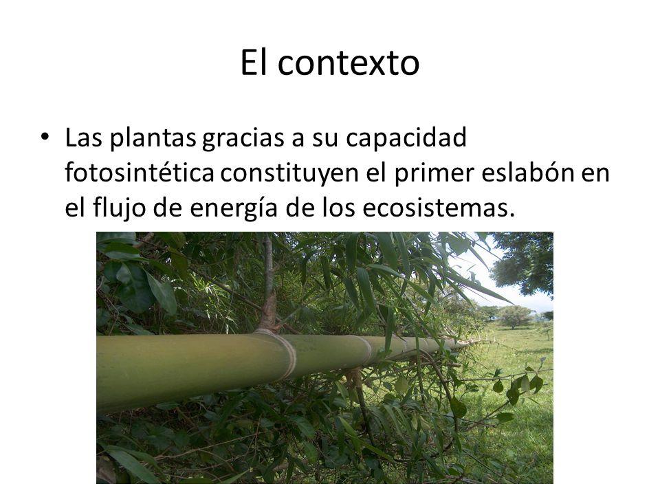 El contexto Las plantas gracias a su capacidad fotosintética constituyen el primer eslabón en el flujo de energía de los ecosistemas.
