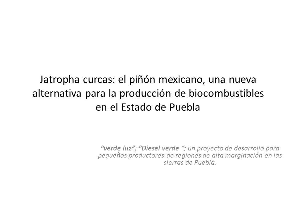 Jatropha curcas: el piñón mexicano, una nueva alternativa para la producción de biocombustibles en el Estado de Puebla verde luz; Diesel verde ; un pr