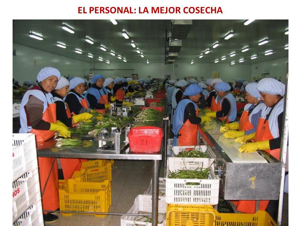 EL PERSONAL: LA MEJOR COSECHA