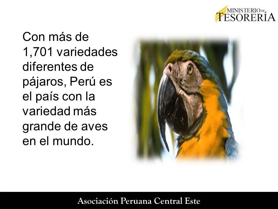 Con más de 1,701 variedades diferentes de pájaros, Perú es el país con la variedad más grande de aves en el mundo.