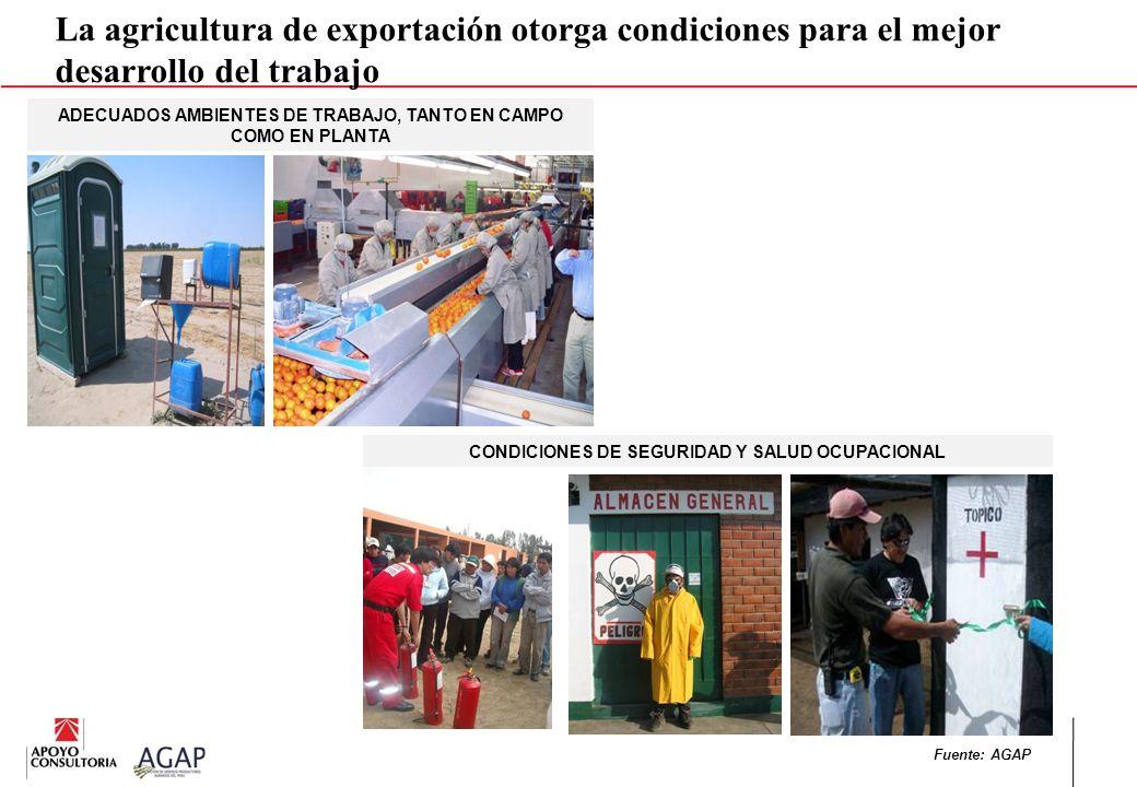 CONDICIONES DE SEGURIDAD Y SALUD OCUPACIONAL La agricultura de exportación otorga condiciones para el mejor desarrollo del trabajo ADECUADOS AMBIENTES